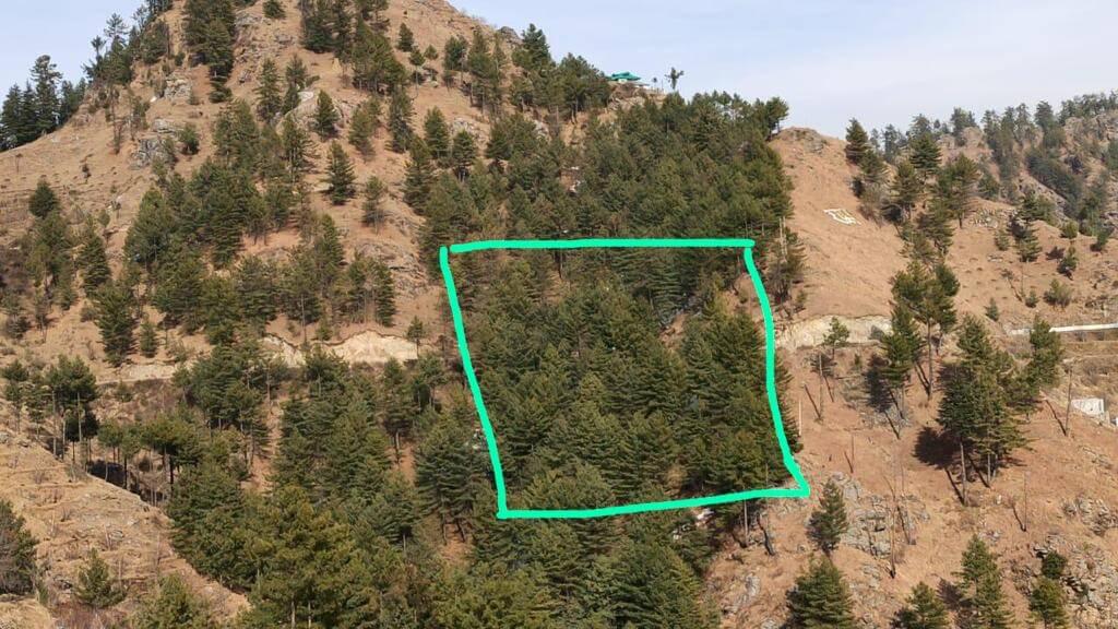 Agricultural Plot / Land for Sale 85 Biswa at Shimla