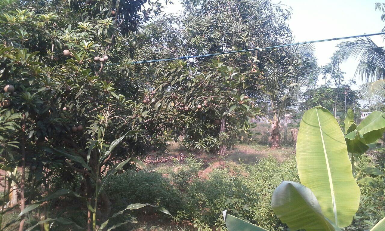 Farm land for sale with low cost At 1,10,000 per cent total 66 cent amount can be negotiate